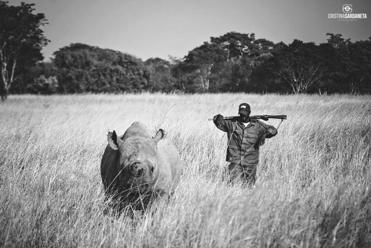 Un rinoceronte negro y su cuidador.